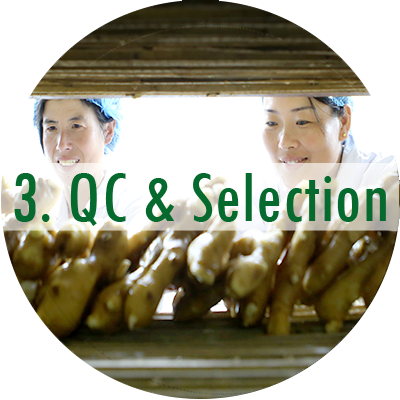 QC & Selection